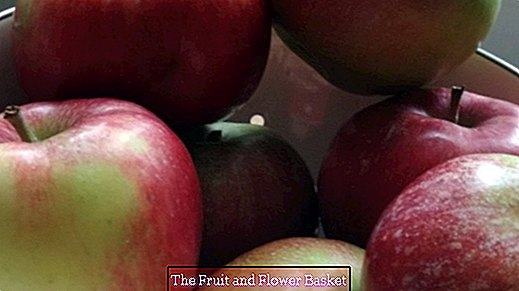 Apples for allergy sufferers