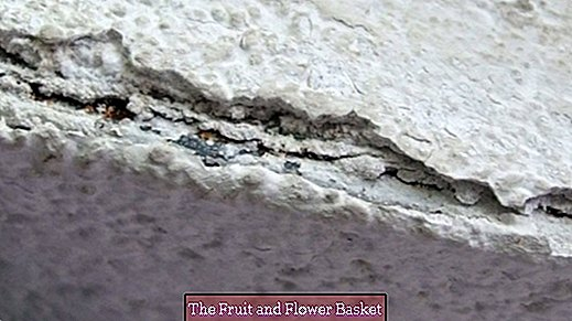 Clean holes and loose walls with plaster