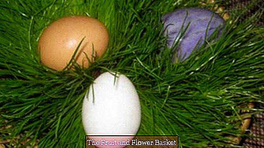Easter baskets with real grass