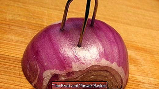 Cut onions without smell on the hands