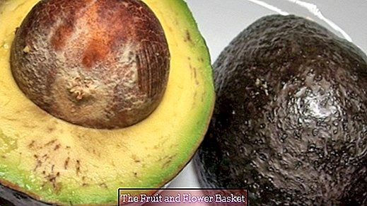 Avocado varieties & how to recognize a ripe fruit