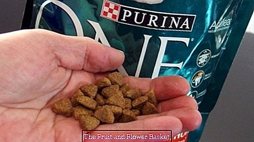 Purina helps against diarrhea in old cats