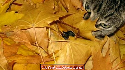 Well-being tip for the cat with autumn leaves