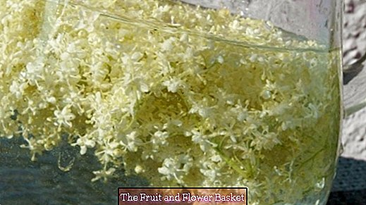 Elderflower limonáda