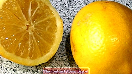 Citrus fruits to 100% use