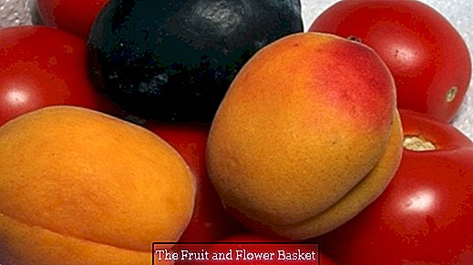 Buy fresh vegetables and fruits cheaply