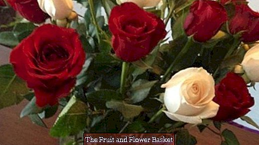 Roses stay fresh longer with sugar