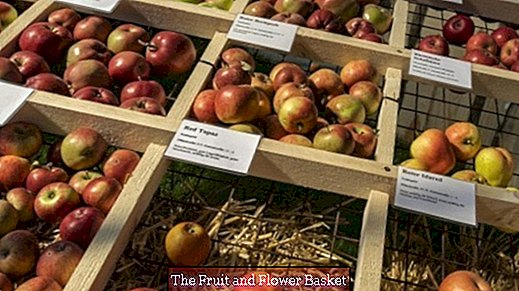 The best-known apple varieties and their use
