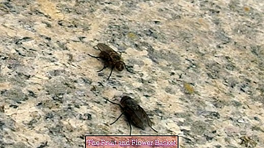 So flies do not fly into the house