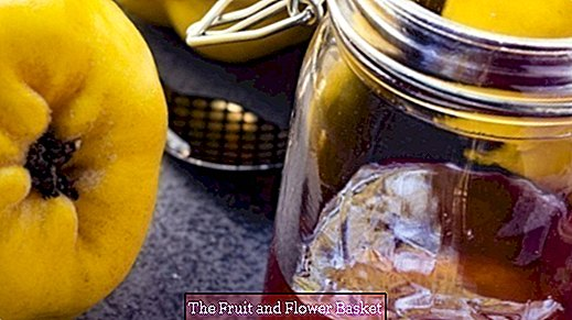 Juicing quince di Thermomix - membuat quince jelly