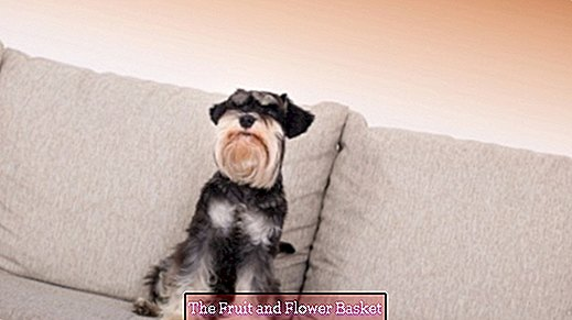 Remove dog hair effectively from the sofa