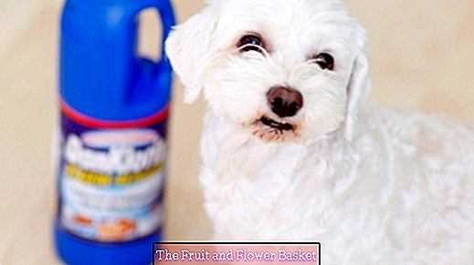 Remove dog urine and urine stain from laminate