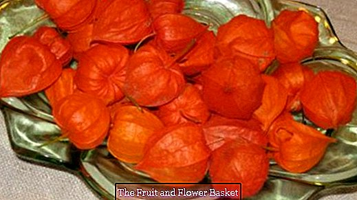 Cup full of lantern flowers - beautiful orange table decoration