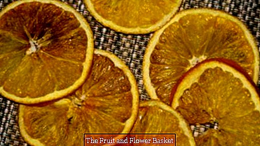 Orange slices dry for the Christmas tinkering