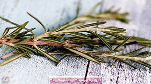 A small bouquet of rosemary - what you can do with it