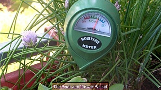 Moisture meter: Pour balcony plants optimally